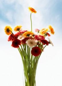 flowers-opt